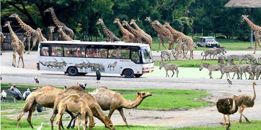 Vườn thú Safari Hồ Tràm